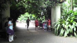 Singapore Zoo - Youth Olympic Flame Relay