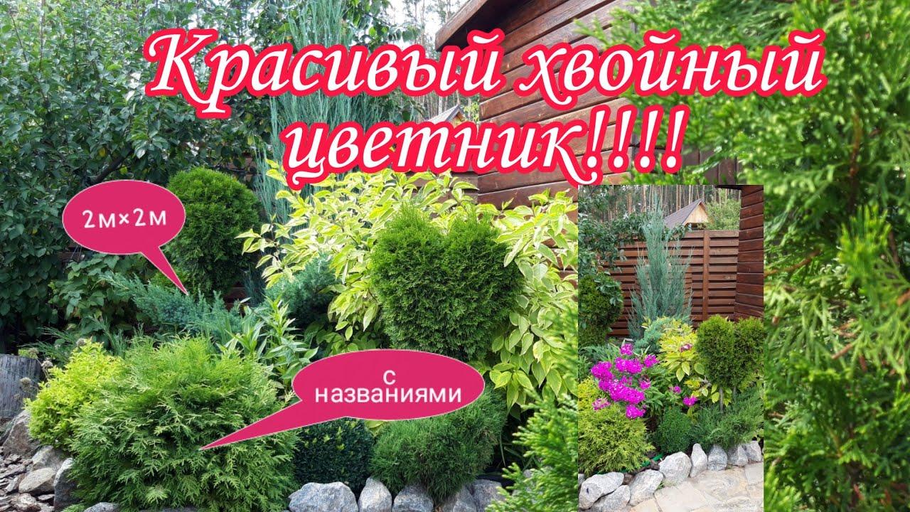Красивый хвойный цветник.хвойная композиция.Красивый сад своими руками.Дача.Сад СветаСветланы
