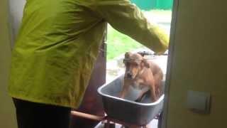 В харьковский приют сдали на  усыпление собаку, которая поломала лапу.