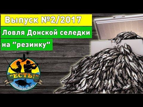 Рыбалка 2017 Ловля селедки на Дону