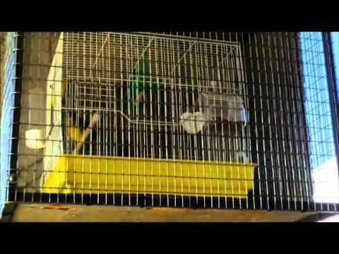 Κατασκευή κλουβιού για προστασία από αρπακτικά