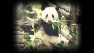 Смотреть клип Илья Гуров - Панды