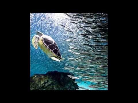 World of Animals - HD