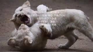 H30年(2018)5月12日(土) 相模原市南区下溝 レストラン「モ...