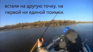 Ловля жереха на Дону  начало октября