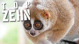 10 süße Tiere, die dich töten könnten!