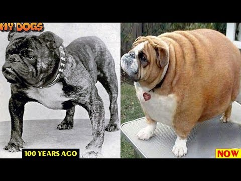 Dog Breeds Then and Now ★2018 [HD]