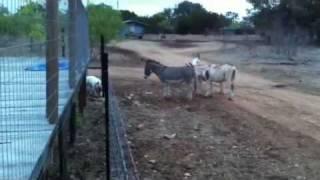 Donkey Show!!!