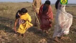 E Gude Maeli Bamur Kaanta Rachkala - Superhit Sambalpuri Song