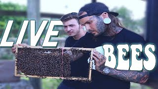 saving-bees-without-a-bee-suit