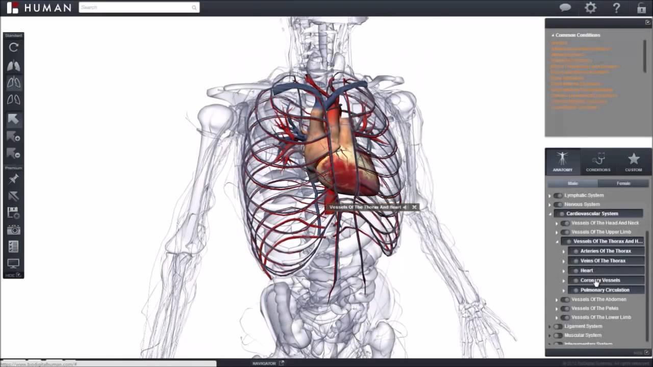 Software para facilitar el estudio de la anatomia humana - YouTube