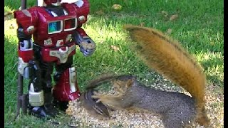 FIGHT!!! Halarious Battle Between Squirrel and Chipmunks
