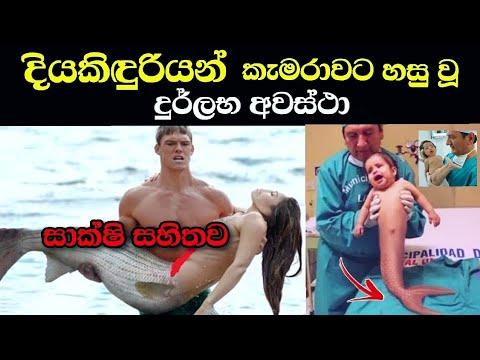 දියකිඳුරියන්-කැමරාවට-හසු-වූ-දුර්ලභ-අවස්ථා-කිහිපයක්-|-mermaids-caught-on-camera-|-wishma-lokaya