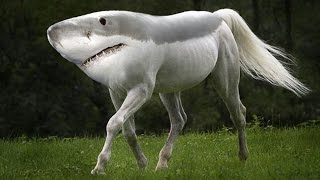 Top 10 Most Amazing Hybrid Animals You Won't Believe Actually Exist