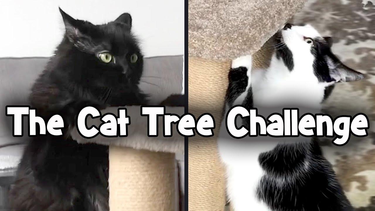 The Felympics - Cat Tree Climb