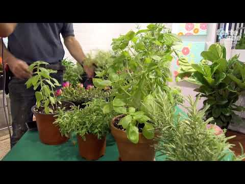 How To Grow Herbs In South Florida