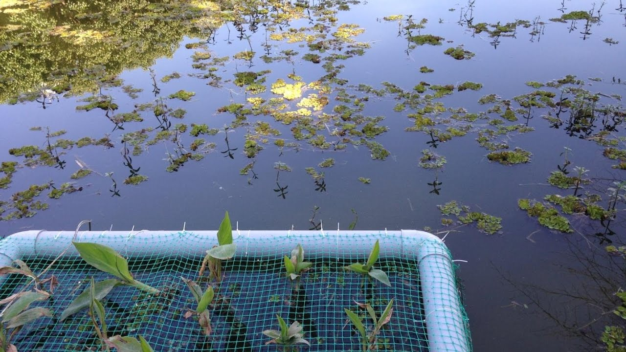 how to make a wetland