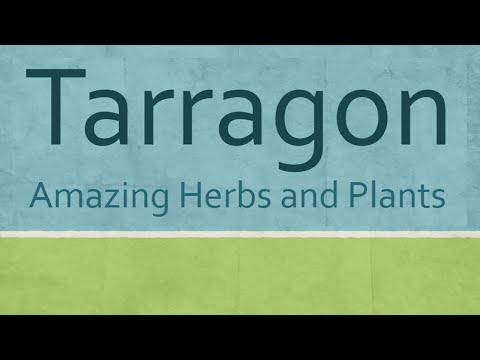Amazing Benefits Tarragon Herbs - Health benefits of Tarragon herb - Tarragon nutrition facts