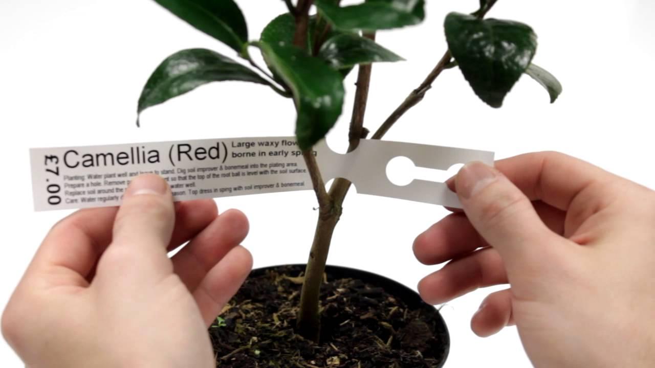 how to printing self tie loop lock labels for plants youtube