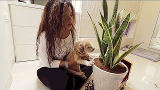 Superb TRICK to save my PLANTS from DOGS | Ss Vlogs :-)