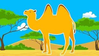 Дикие Животные Африки.Про Верблюда. Обучающие Мультики о Диких Животных. Развивающее Видео для Детей