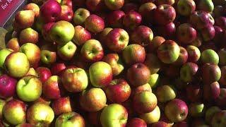 The Taste Of Fall At Knaebe S Apple Farm Field Trip Friday Youtube