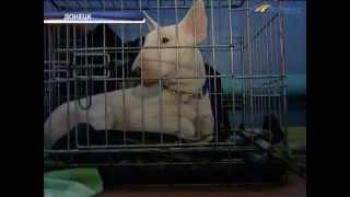 ТК Донбасс - Международная выставка собак в Донецке