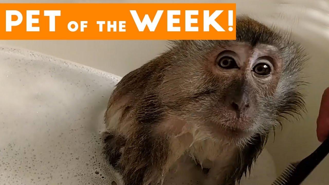 Cutest Pet Clip of the Week September 2017 | Monkey Takes a Bath