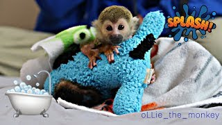 Baby Monkey oLLie Bath & Diaper Time!!