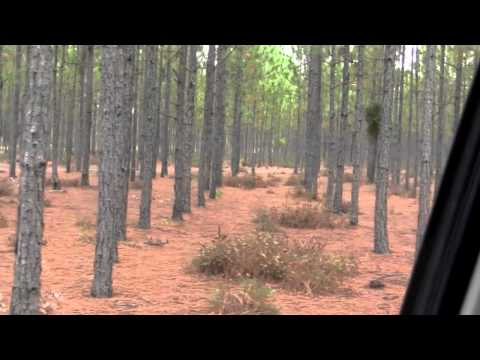 Georgia Land for Sale - River Frontage with Acreage