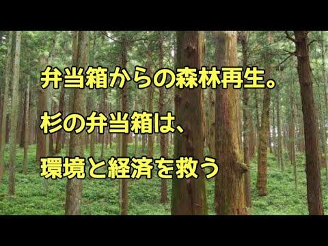 弁当箱からの森林再生。杉の弁当箱は環境と経済を救う