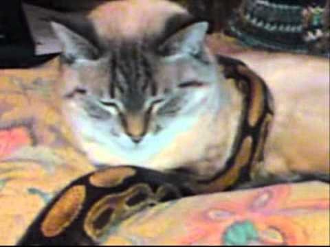 Cat Loves Her Snakes Read Video Info Before Posting A Comment Youtube
