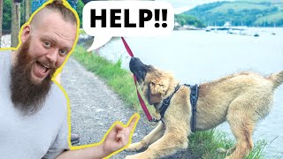 How To STOP A Dog Pulling And Barking On Leash