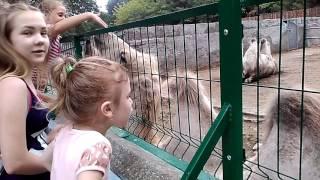 видео Куда пойти в Одессе с ребенком?