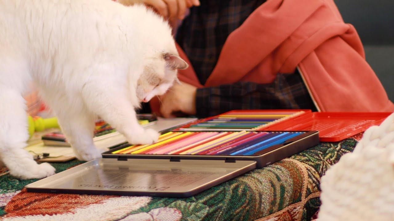 11분 동안 엄마랑 고양이랑 색연필 가지고 노는 영상(진짜 그거밖에 없음, 강한 색연필 소리 팅글 ASMR )ㅣ Eng Sub