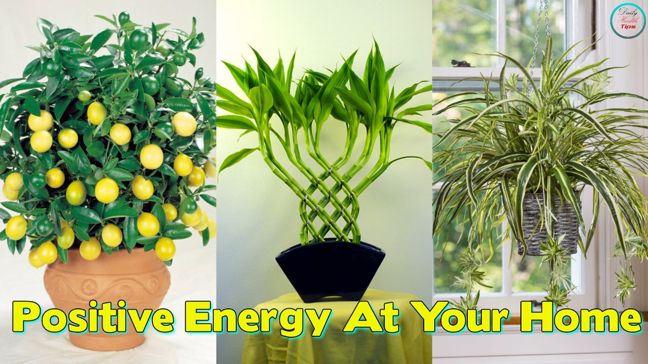 These 10 plants improve the positive energy at your home for Good plants to have indoors