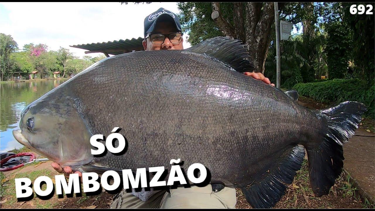"""Os """"BomBomZão"""" do Lago Verde (FISHINGTUR #692) Tambacus e Tambaquis"""