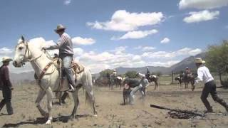 Cattle Branding at Zapata Ranch