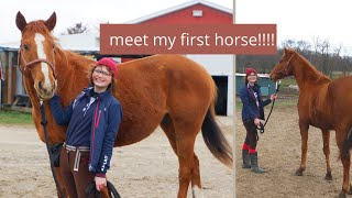 BRINGING MY NEW HORSE HOME/ #projecthorse