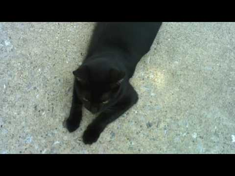 Kitten Saving Adventure Ft Wayne Coyne
