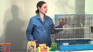 Providing Enrichment for your Pet Bird