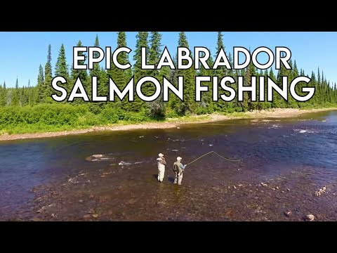 Big River Salmon | Epic Labrador Fishing