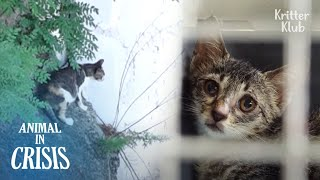 Limping Kitten Abandoned By Mom Still Hopes She'll Come To Take Him Home | Animal in Crisis EP213