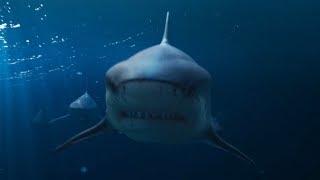 'Deep Blue Sea 2' Home Release Trailer