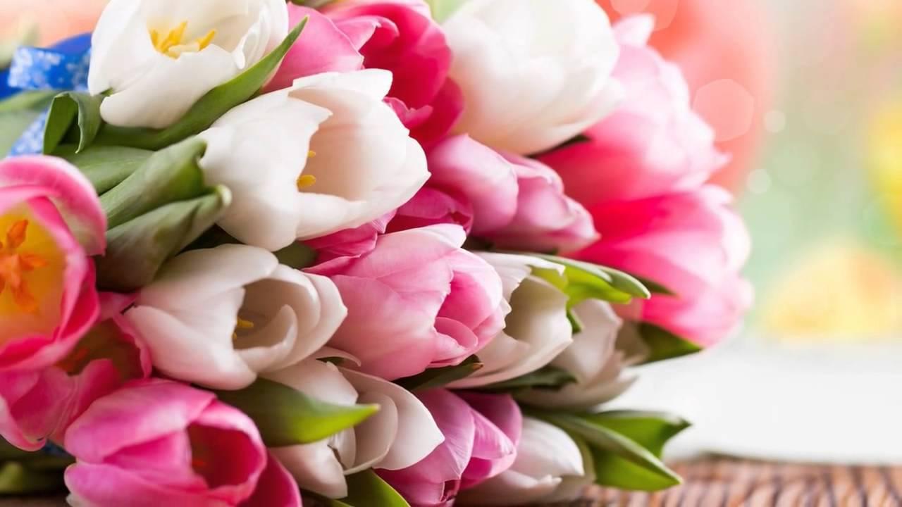 Картинки по запросу весенние цветы картинки