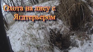 Охота на лису.Лиса вышла через 33 секунды