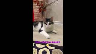 Смешной кот дышит как собака