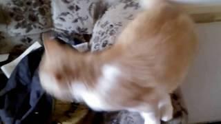 кот просится на руки