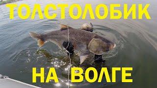 Как проходит обучение подводной охоте на ТОЛСТОЛОБИКА.