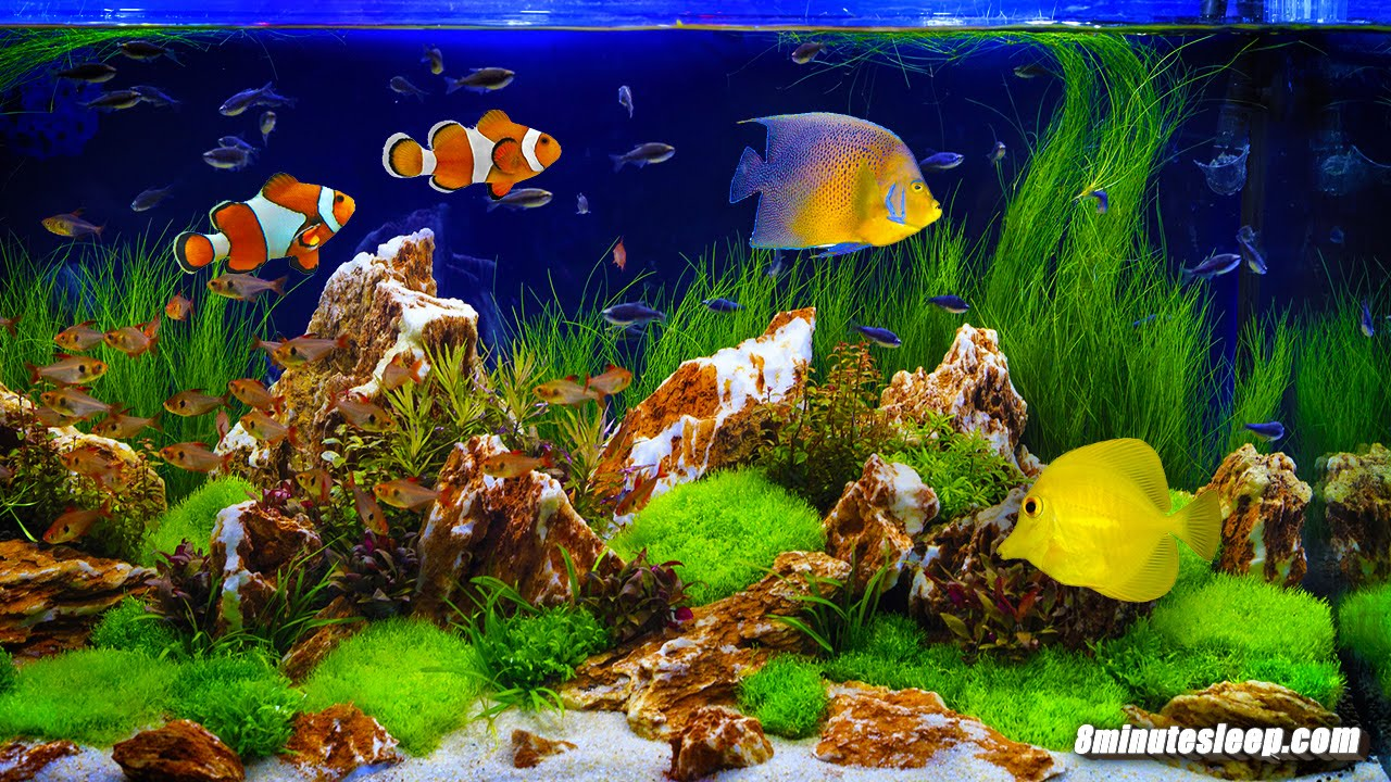 FISH TANK SOOTHING SOUNDS | Aquarium Bubbling White Noise ...Fresh Water Aquarium Gold Fish Images